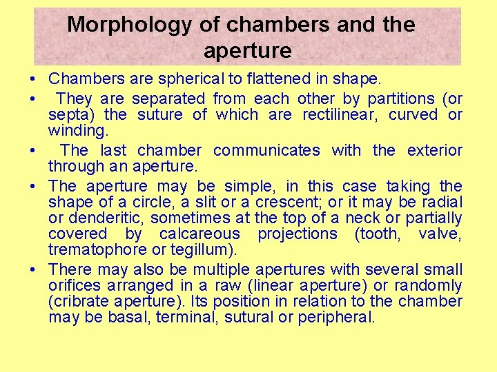 Morphology of chambers and the aperture • Chambers are spherical to flattened in shape.