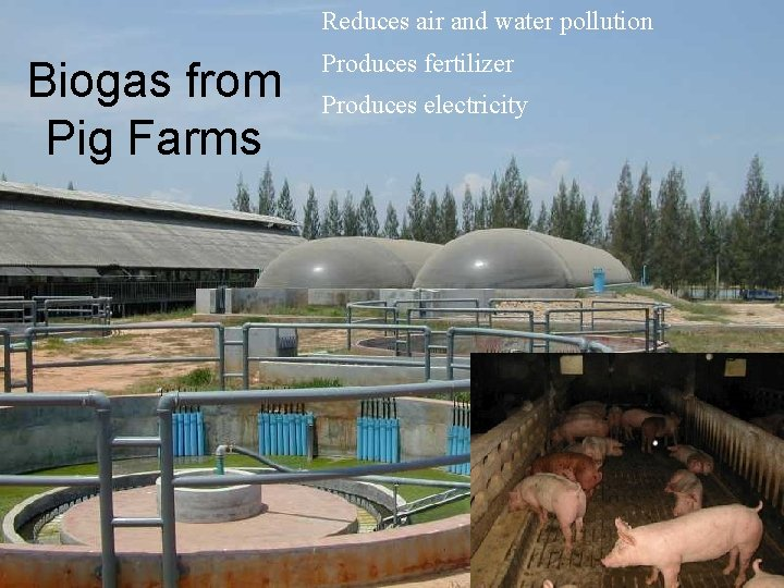 Reduces air and water pollution Biogas from Pig Farms Produces fertilizer Produces electricity