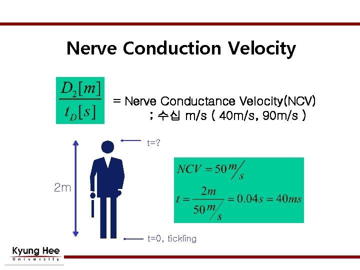 Nerve Conduction Velocity = Nerve Conductance Velocity(NCV) ; 수십 m/s ( 40 m/s, 90