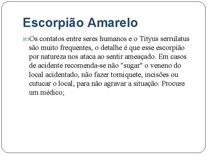 Escorpião Amarelo Os contatos entre seres humanos e o Tityus serrulatus são muito frequentes,
