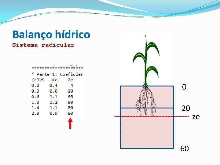 Balanço hídrico Sistema radicular 0 20 60 ze