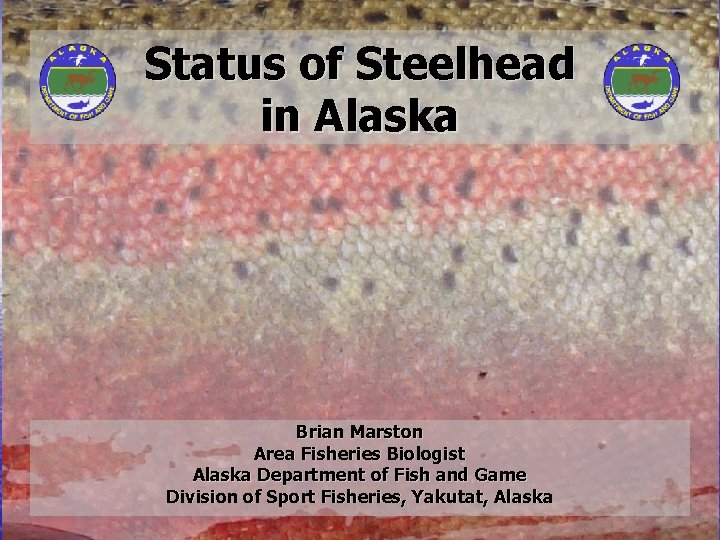 Status of Steelhead in Alaska Brian Marston Area Fisheries Biologist Alaska Department of Fish