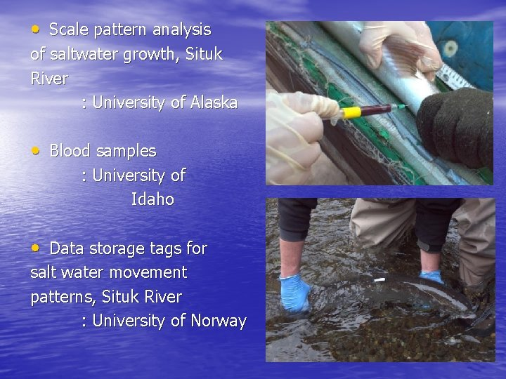 • Scale pattern analysis of saltwater growth, Situk River : University of Alaska