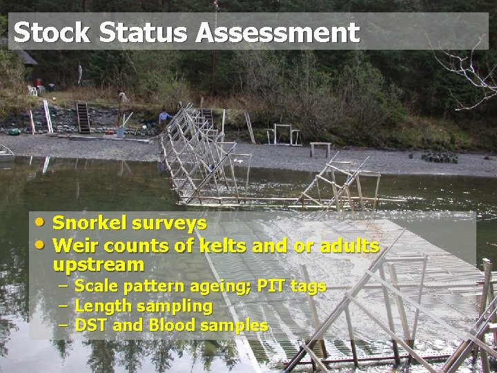 Stock Status Assessment • Snorkel surveys • Weir counts of kelts and or adults