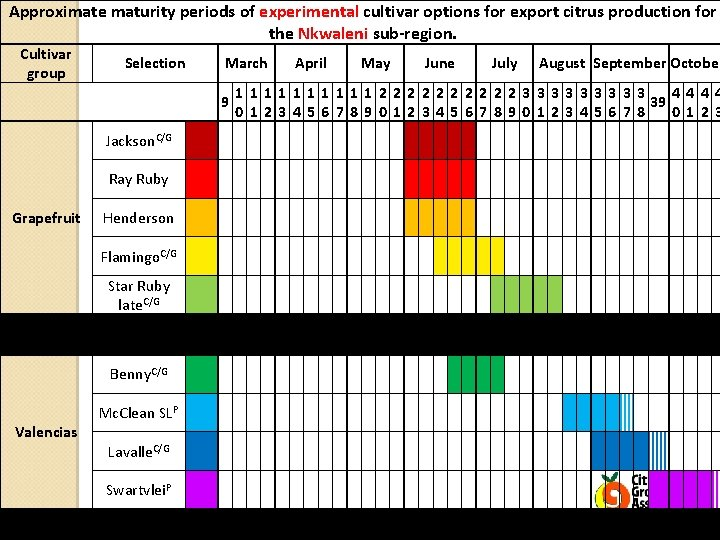 Approximate maturity periods of experimental cultivar options for export citrus production for the Nkwaleni