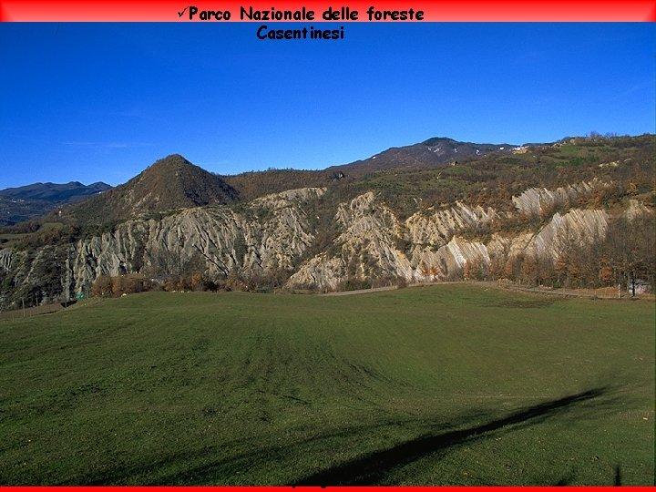 üParco Nazionale delle foreste Casentinesi Il clima è marittimo sulla costa con inverni miti
