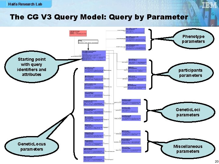 Haifa Research Lab The CG V 3 Query Model: Query by Parameter Phenotype parameters