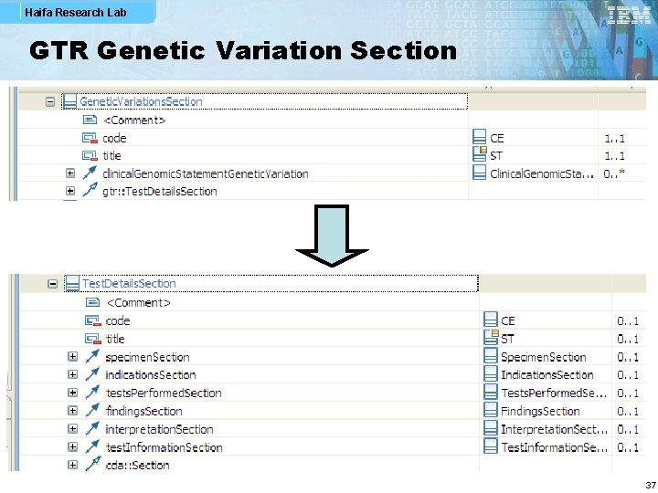 Haifa Research Lab GTR Genetic Variation Section 37