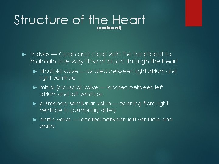 Structure of the Heart (continued) Valves — Open and close with the heartbeat to