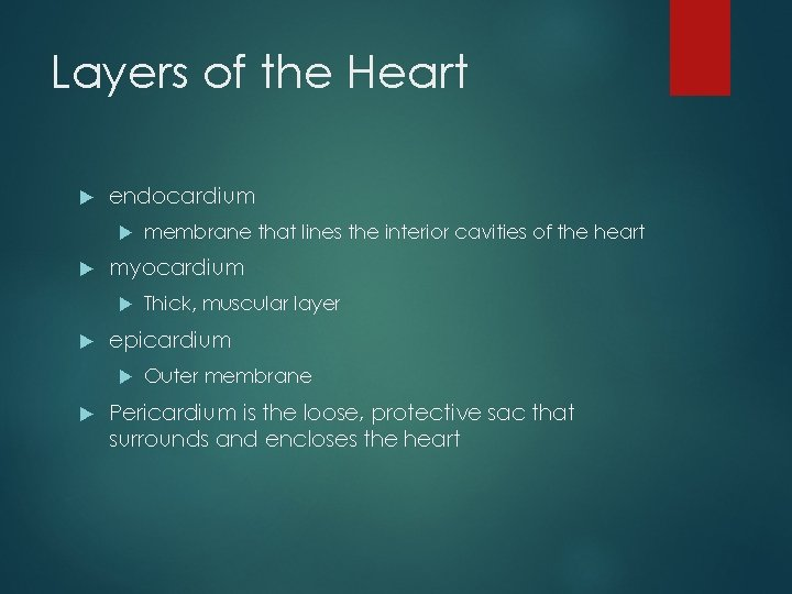 Layers of the Heart endocardium myocardium Thick, muscular layer epicardium membrane that lines the