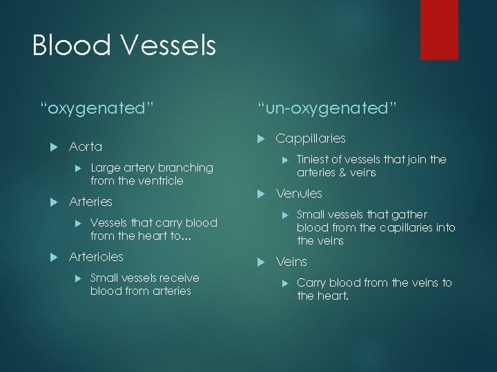 """Blood Vessels """"oxygenated"""" Aorta Small vessels receive blood from arteries Cappillaries Tiniest of vessels"""