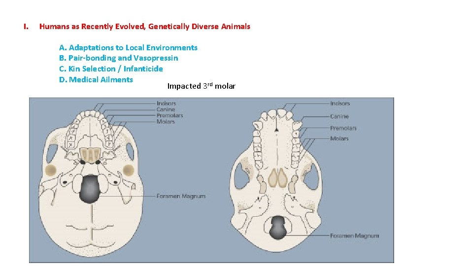I. Humans as Recently Evolved, Genetically Diverse Animals A. Adaptations to Local Environments B.