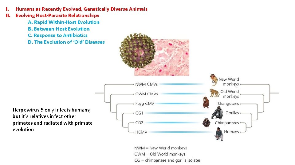 I. Humans as Recently Evolved, Genetically Diverse Animals II. Evolving Host-Parasite Relationships A. Rapid