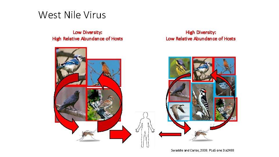 West Nile Virus Low Diversity: High Relative Abundance of Hosts High Diversity: Low Relative