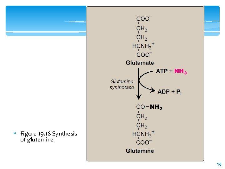 Figure 19. 18 Synthesis of glutamine 10 10
