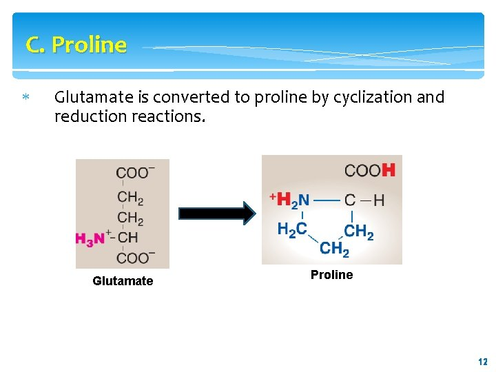 C. Proline Glutamate is converted to proline by cyclization and reduction reactions. Glutamate Proline