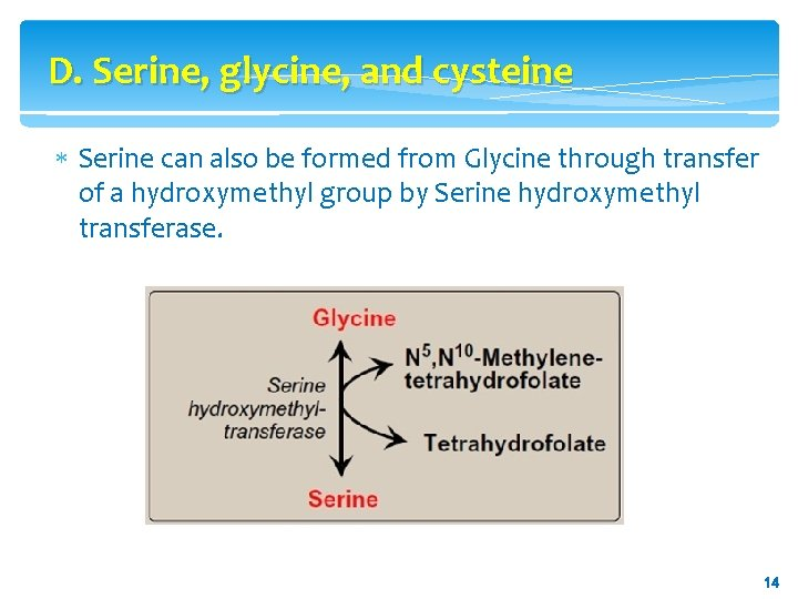 D. Serine, glycine, and cysteine Serine can also be formed from Glycine through transfer