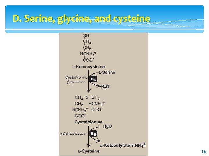 D. Serine, glycine, and cysteine 16 16