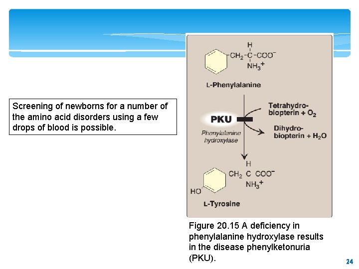 Screening of newborns for a number of the amino acid disorders using a few