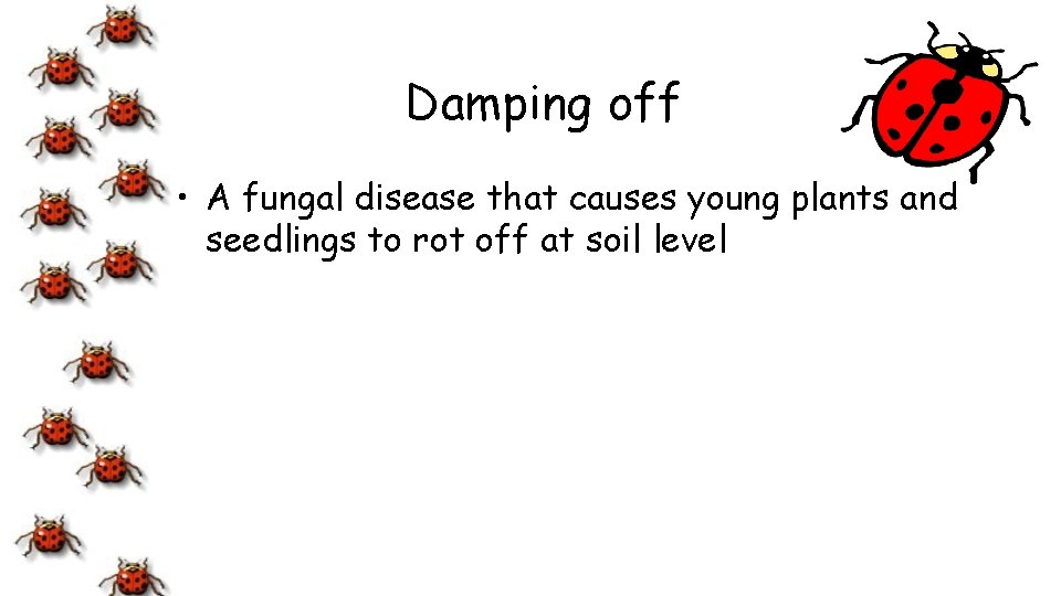 Damping off • A fungal disease that causes young plants and seedlings to rot