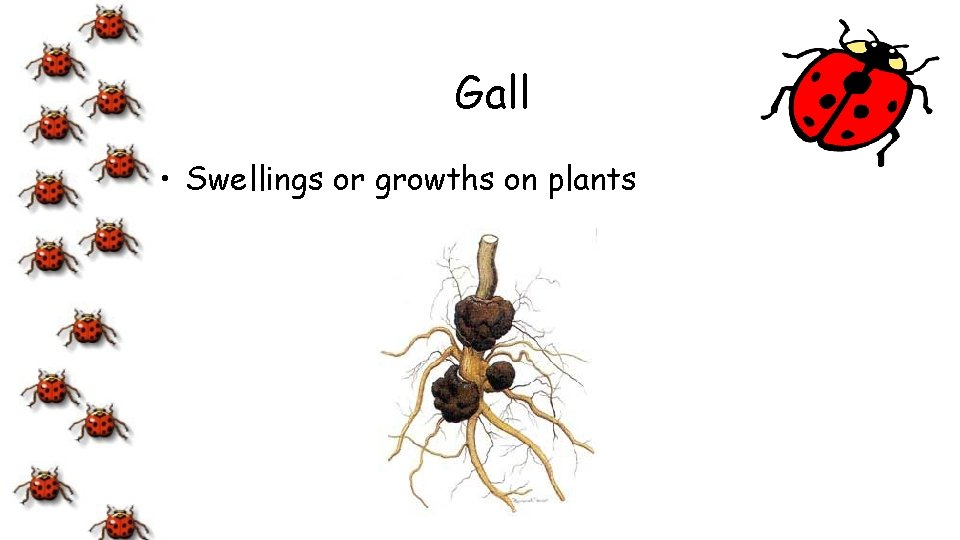 Gall • Swellings or growths on plants