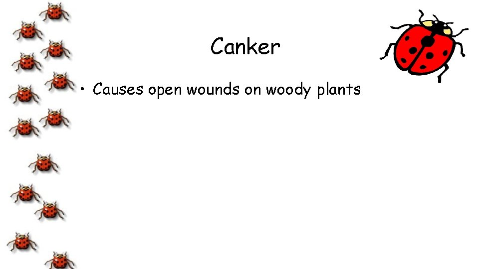 Canker • Causes open wounds on woody plants