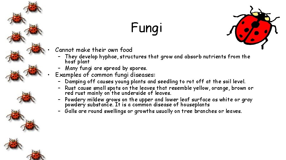 Fungi • Cannot make their own food – They develop hyphae, structures that grow