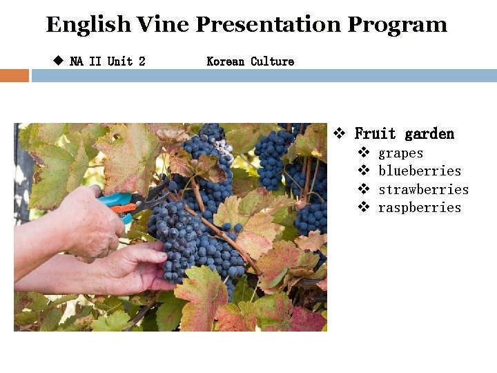 English Vine Presentation Program u NA II Unit 2 Korean Culture v Fruit garden