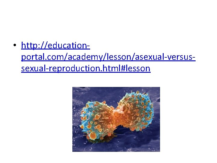 • http: //educationportal. com/academy/lesson/asexual-versussexual-reproduction. html#lesson