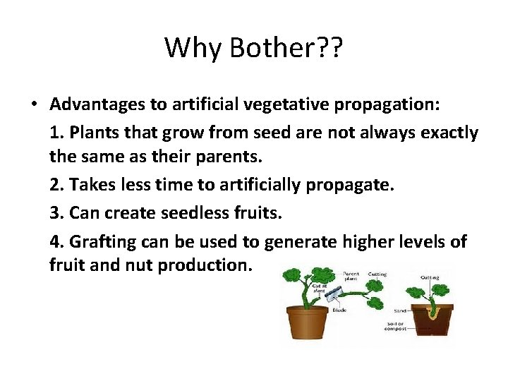 Why Bother? ? • Advantages to artificial vegetative propagation: 1. Plants that grow from