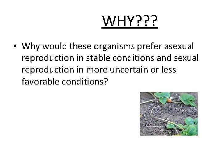 WHY? ? ? • Why would these organisms prefer asexual reproduction in stable