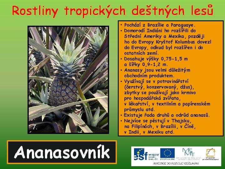 Rostliny tropických deštných lesů • Pochází z Brazílie a Paraguaye. 7. Ananasovník • Domorodí