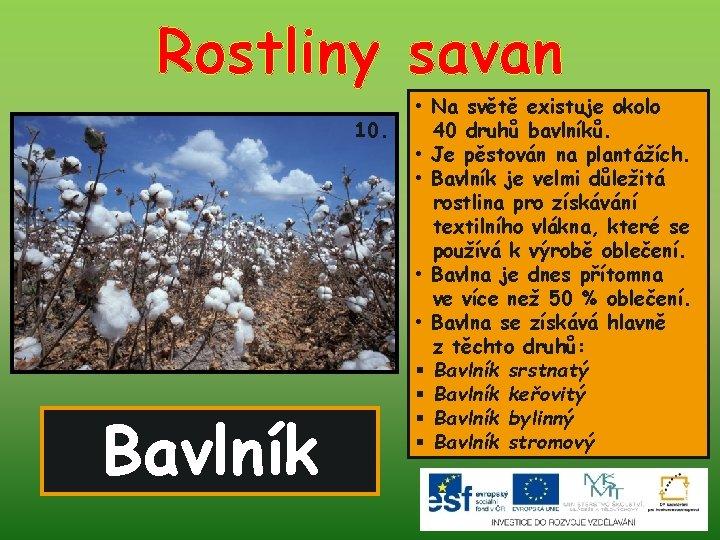 Rostliny savan 10. Bavlník • Na světě existuje okolo 40 druhů bavlníků. • Je
