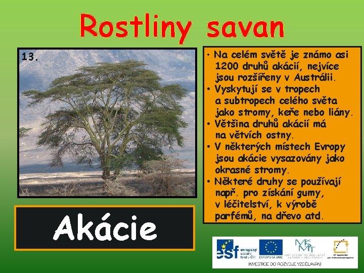 Rostliny savan 13. Akácie • Na celém světě je známo asi 1200 druhů akácií,