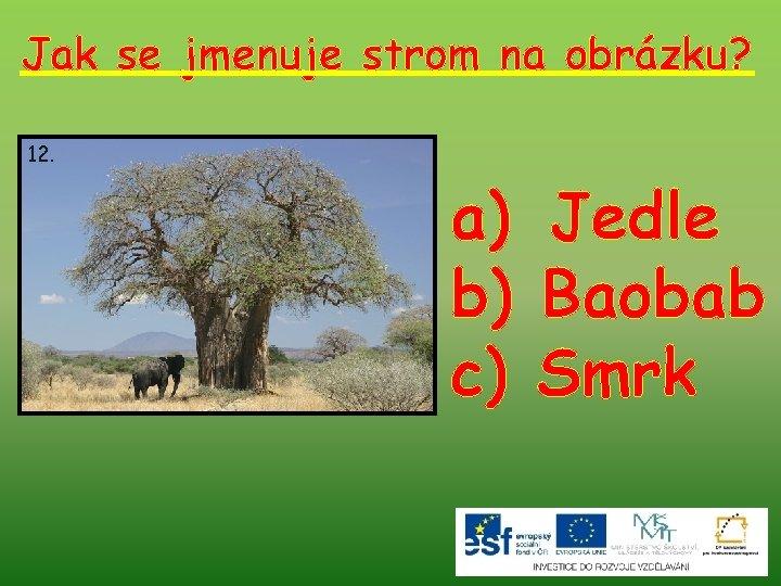 Jak se jmenuje strom na obrázku? 12. a) Jedle b) Baobab c) Smrk