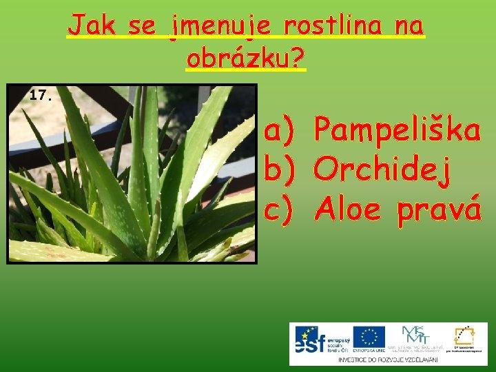 Jak se jmenuje rostlina na obrázku? 17. a) Pampeliška b) Orchidej c) Aloe pravá