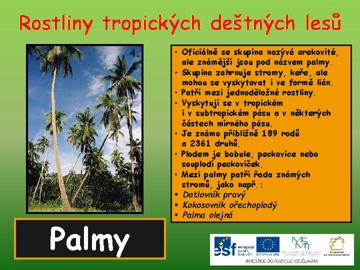 Rostliny tropických deštných lesů 4. Palmy • Oficiálně se skupina nazývá arekovité, ale známější