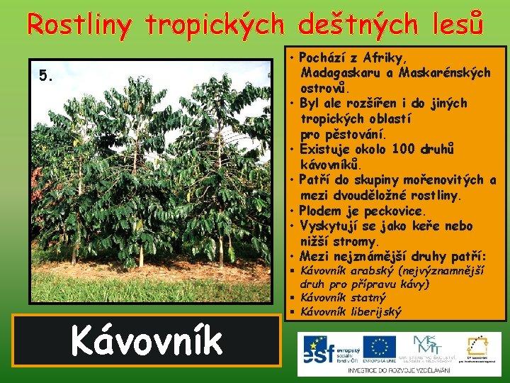 Rostliny tropických deštných lesů • Pochází z Afriky, Madagaskaru a Maskarénských ostrovů. • Byl