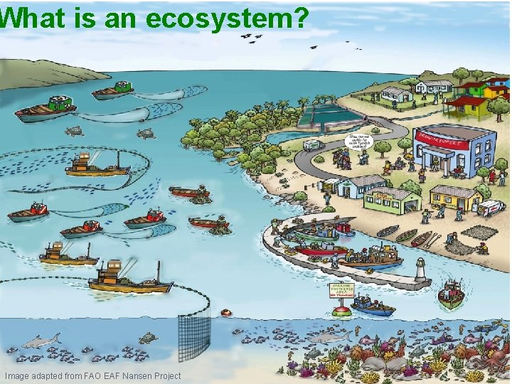 What is an ecosystem? Image adapted from FAO EAF Nansen Project