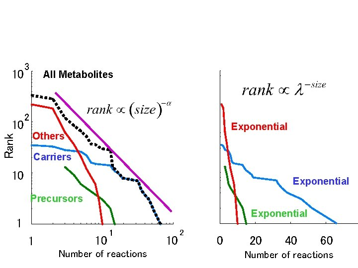 10 Rank 10 3 All Metabolites 2 Exponential Others Carriers 10 Exponential Precursors Exponential