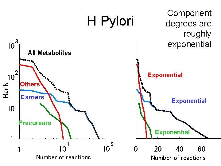 Component degrees are roughly exponential H Pylori 10 Rank 10 3 All Metabolites 2