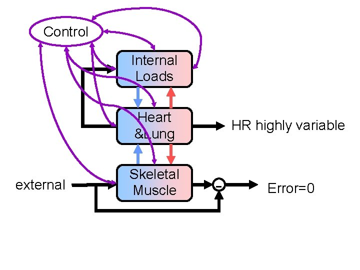 Control Internal Loads Heart &Lung external Skeletal Muscle HR highly variable - Error=0