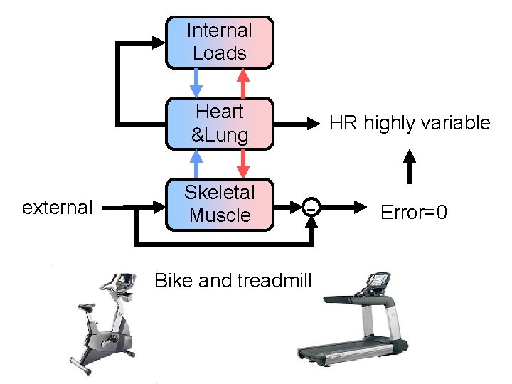 Internal Loads Heart &Lung external Skeletal Muscle HR highly variable - Bike and treadmill