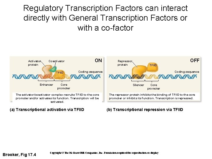 Regulatory Transcription Factors can interact directly with General Transcription Factors or with a co-factor