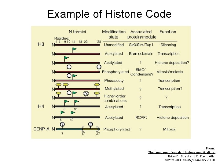 Example of Histone Code From: The language of covalent histone modifications Brian D. Strahl