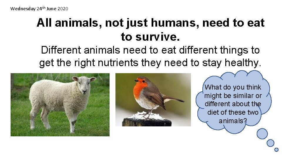 Wednesday 24 th June 2020 All animals, not just humans, need to eat to