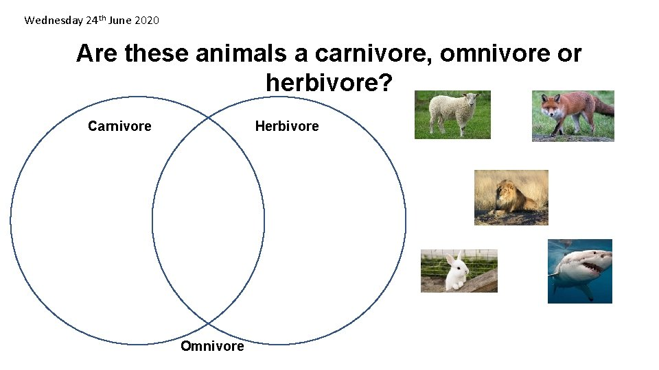 Wednesday 24 th June 2020 Are these animals a carnivore, omnivore or herbivore? Carnivore