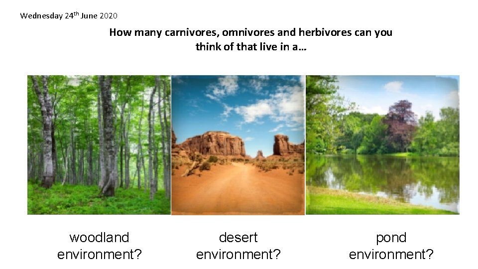 Wednesday 24 th June 2020 How many carnivores, omnivores and herbivores can you think