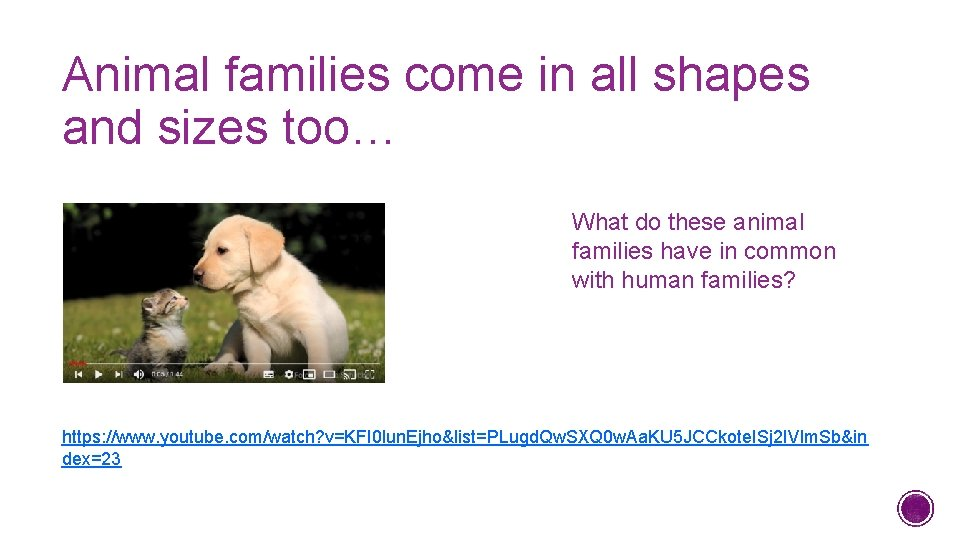 Animal families come in all shapes and sizes too… What do these animal families