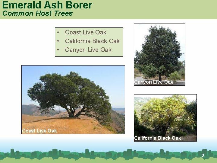 Emerald Ash Borer Common Host Trees • Coast Live Oak • California Black Oak